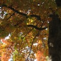 Donna Cook Fall leaves in Boise