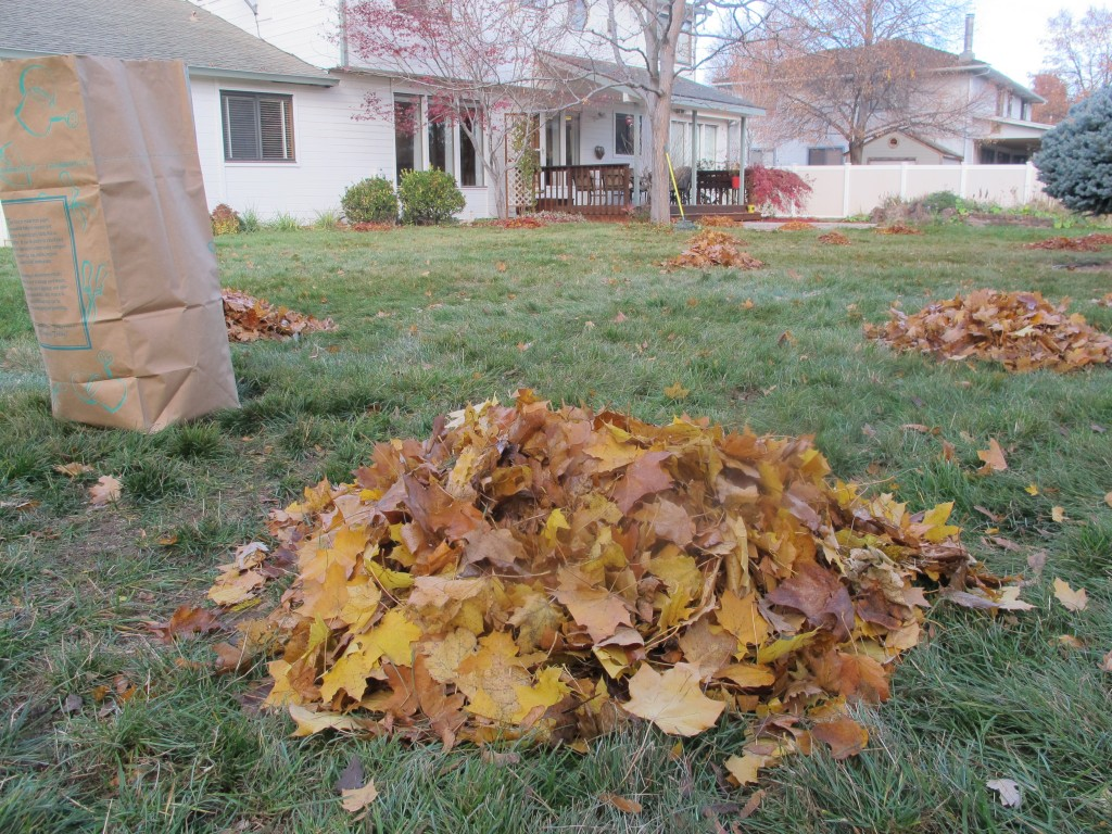 Donna Cook fall leaf piles in Boise